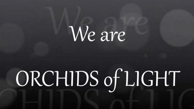 We are Orchids of Light